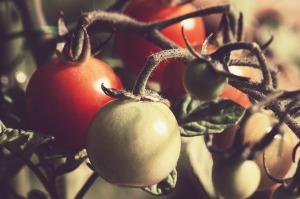 tomato-676532_1280