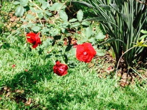 Red flower park2