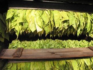 tobacco-16773_640